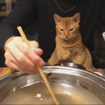 鍋好き猫ちゃん
